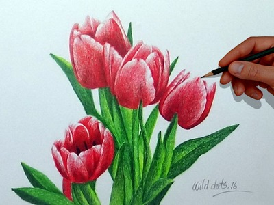 How To Draw A Flower With Simple Colored Pencils - Tulip |