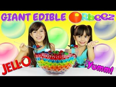 EDIBLE ORBEEZ - DIY Giant Gummy Orbeez! Jelly Pudding