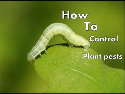 How to Protect Your Trees from  Pests. leaf eater | Pithecellobium dulce
