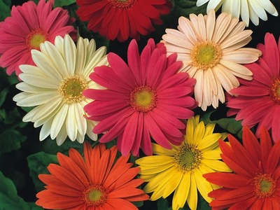 How to make beautiful flowers - gerbera paper flower