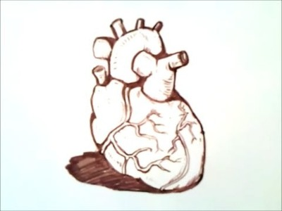 How to draw a human heart | how to draw a human heart step by step