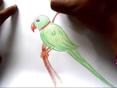 How to draw Parrot step by step