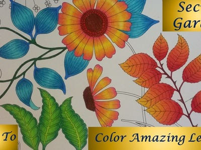 How To : Color Amazing Leaves   Secret Garden Coloring Book