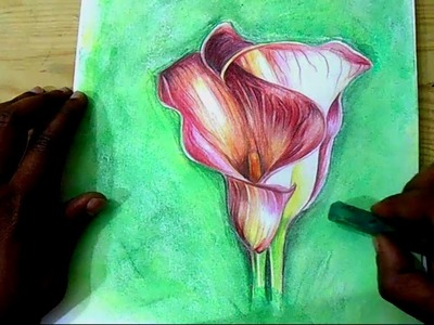 How to draw Flowers |  calla lilies flower | step by step Drawing | draw