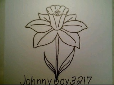 How To Draw A Daffodil Flower easy For Everyone Como dibujar una flor del narcisa