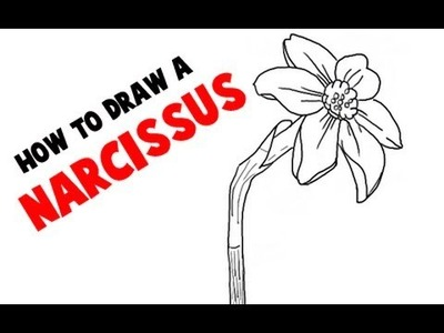 How to Draw a Narcissus Flower or Daffodil