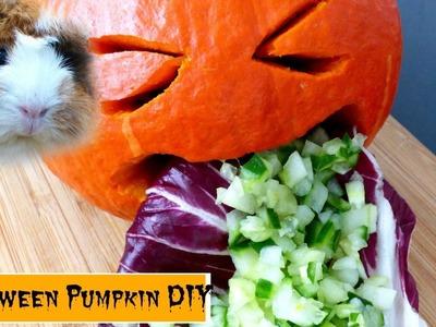 Halloween Vomiting Pumpkin Veggie DIY for Guinea Pigs