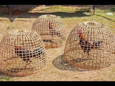 Khmer Agriculture: How to make chicken basket, របៀបធ្វើទ្រុងកូនមាន់   Entertainment and Agriculture