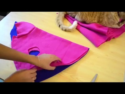 A hoodie for a cat [5 Minute Crafts] | NIFTY | DIY