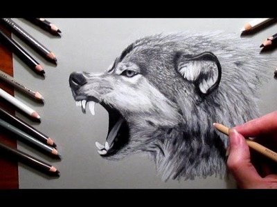 How to Draw a Wolf Pencil #drawing | Jasmina Susak Speed drawing of a wolf
