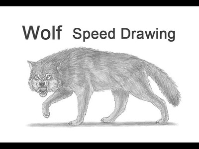 Wolf Growling. Snarling Time-lapse (Speed) Drawing