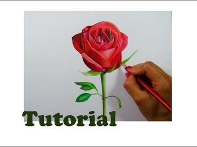 Cómo dibujar una rosa   How to draw a rose
