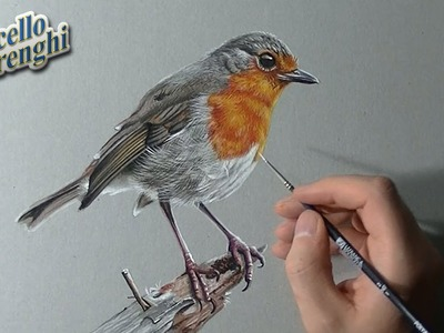 How to draw a Robin bird