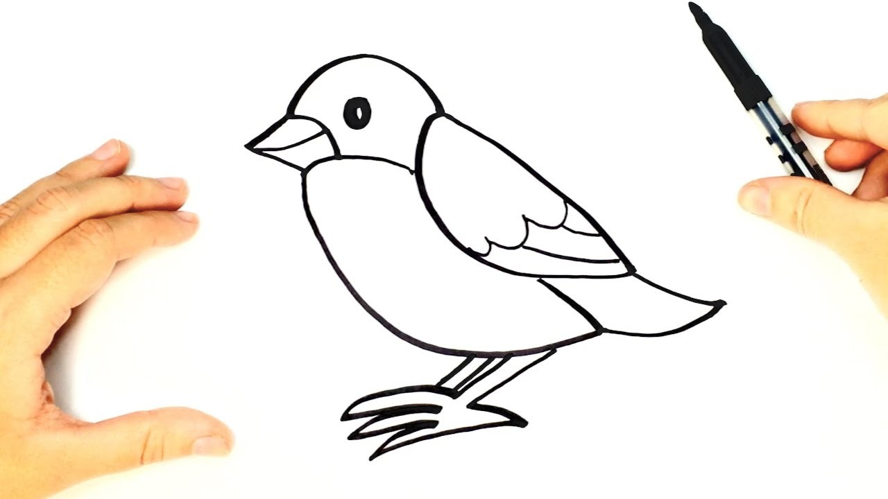 Bird drawing for kids