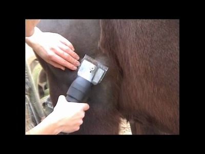 How To Clip A Horse • Starting The Blanket Clip