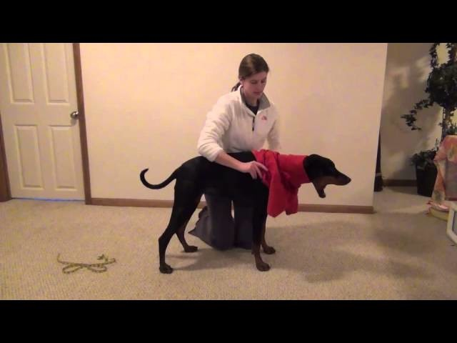 How to measure for the Hotterdog Fleece dog Sweater