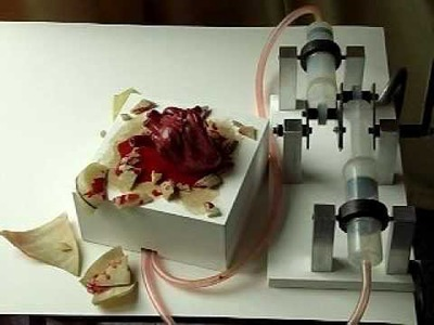 Beating heart model with mechanism