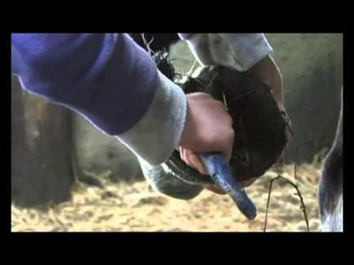 Crafty Ponies! PONY LESSONS -  how to groom a pony!