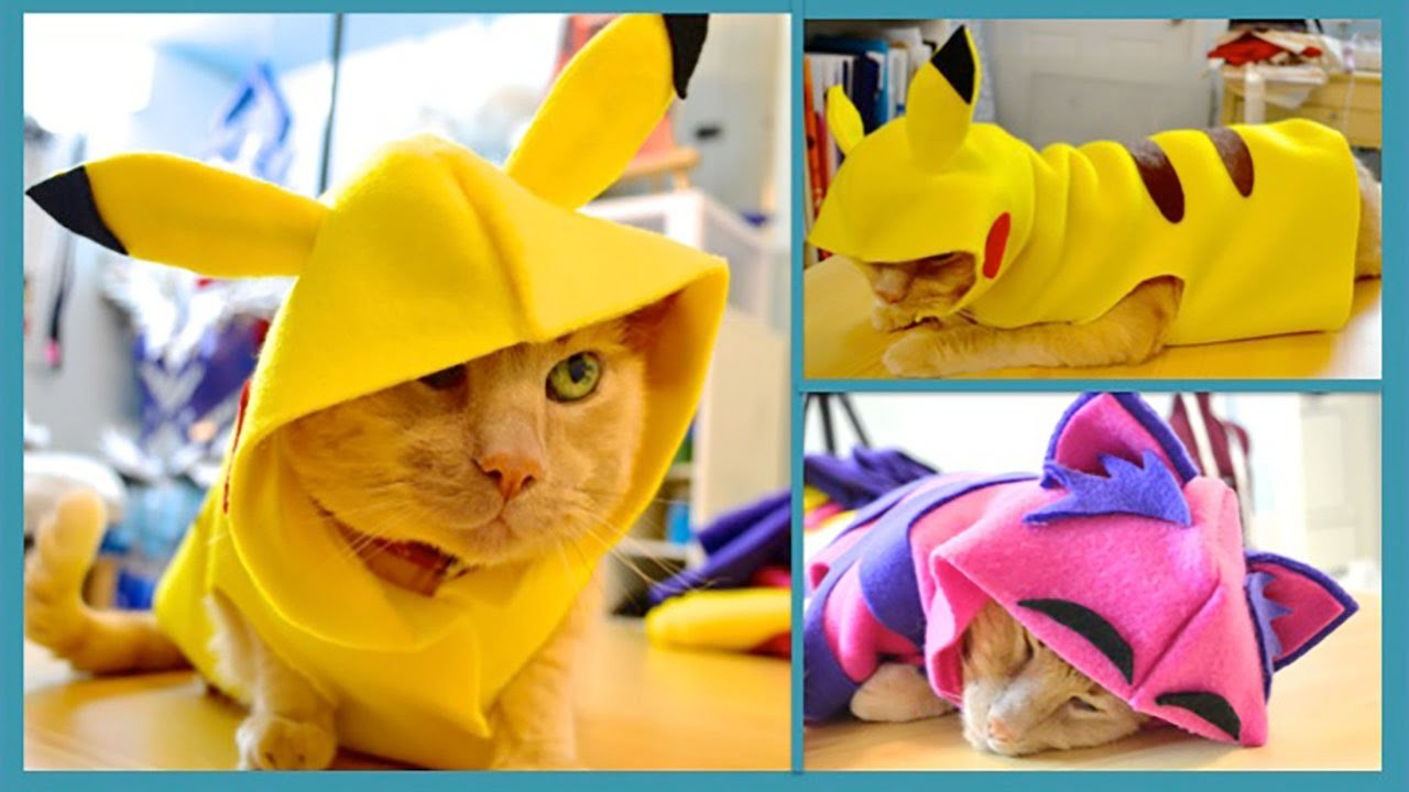 DIY Pet Costume- How To Make A Hoodie For Your Cat- No Sew!