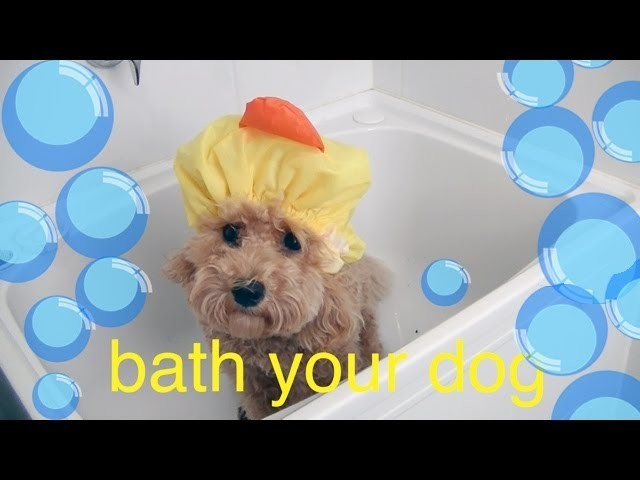 Bath your Toy Poodle - DIY Dog Hygiene.Groom - a tutorial by Cooking For Dogs