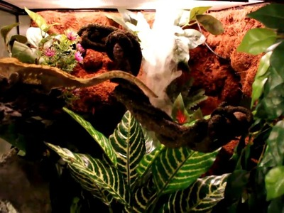 (Part 12.12) DIY Crested Gecko Setup