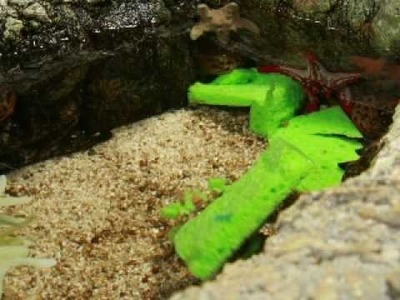 Family Craft and Decorator Crabs Set the Mood for St. Patricks Day at SEA LIFE™ Aquarium