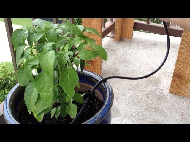 DIY Gravity-Fed Drip Irrigation System