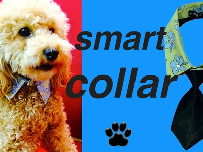 DOG COLLAR UPCYCLE SHIRT FORMAL NO-SEW NECKTIE  -  DIY Dog Food.Craft by Cooking For Dogs
