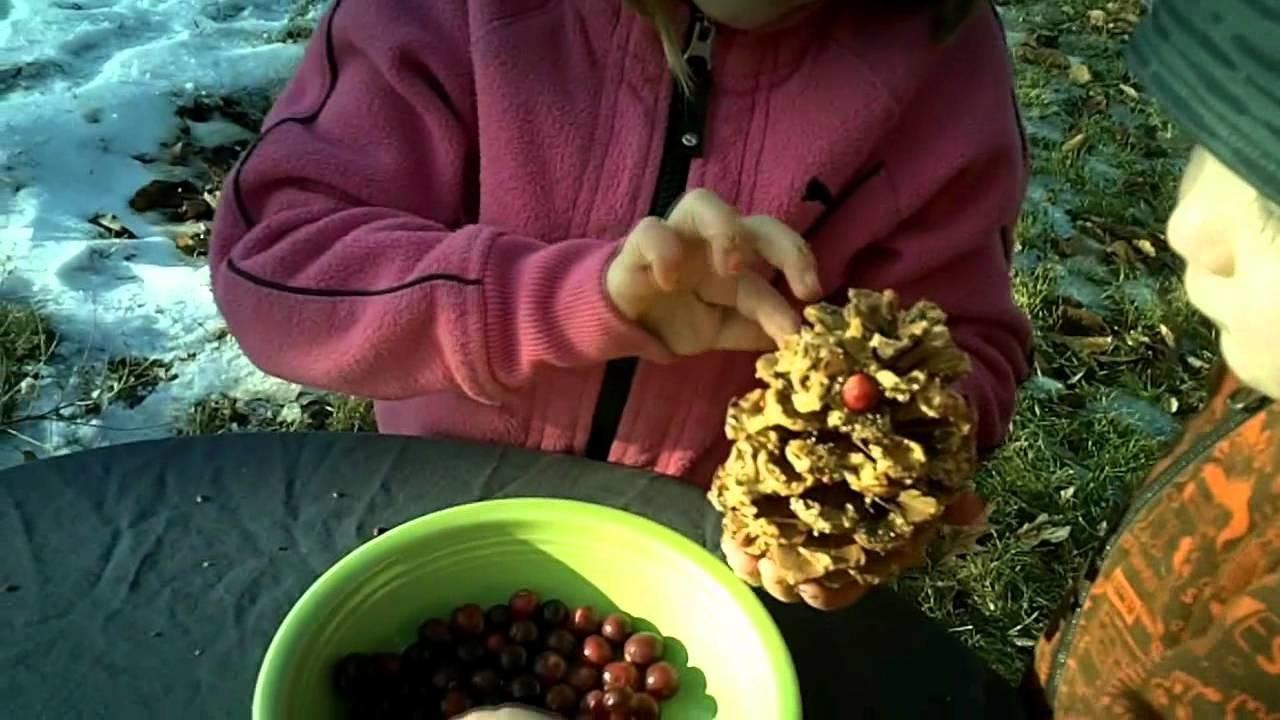 How To Make A Pinecone Bird Feeder