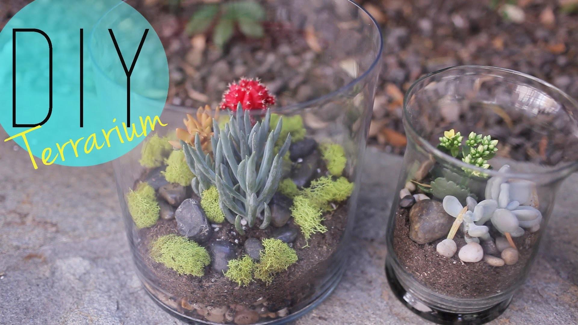 DIY Indoor Garden - Cactus Terrarium {How to} by ANNEORSHINE