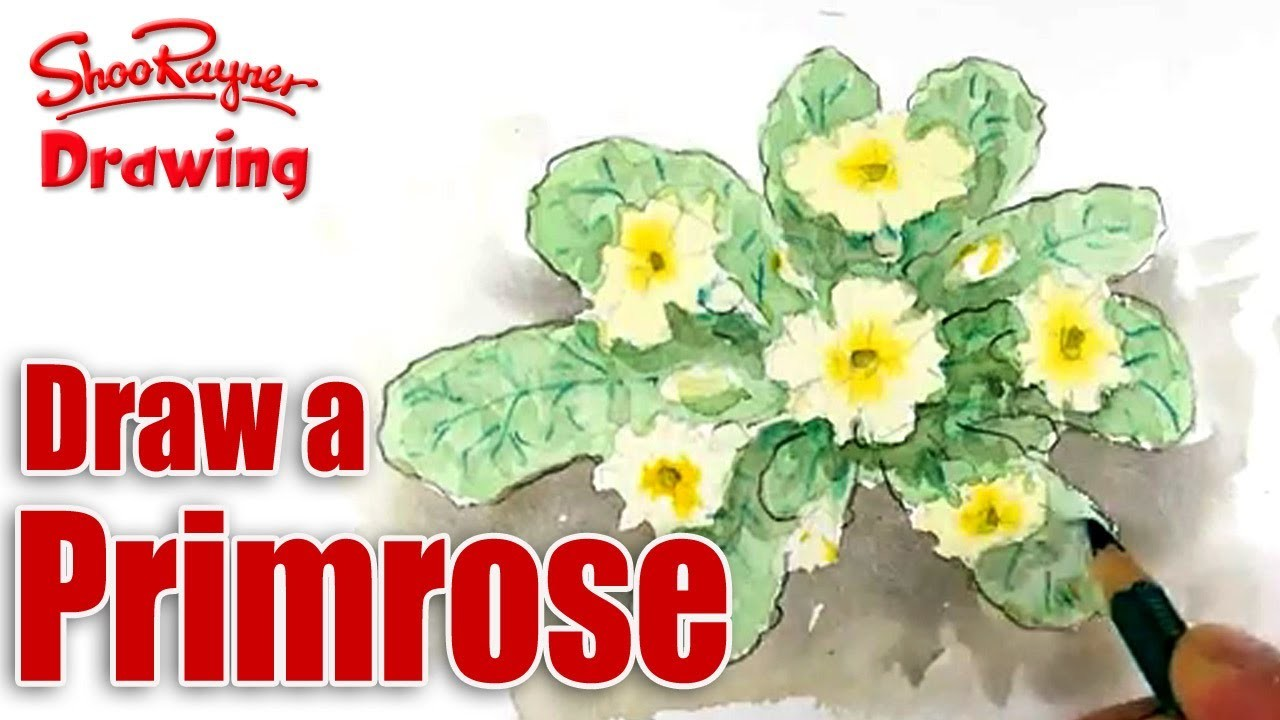 How to draw and paint Primroses  - Spoken Tutorial