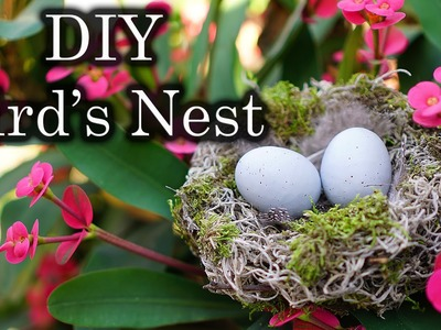 Easter. Spring Decor: DIY Bird's Nest with Spanish Moss