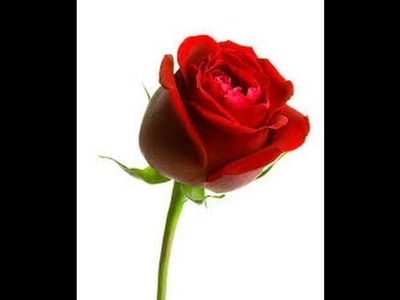 How to Make Rose with Red Tissue