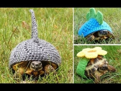 Now that's what you call a shell suit! Tortoise owner knits dozens of adorable outfits for her pets.