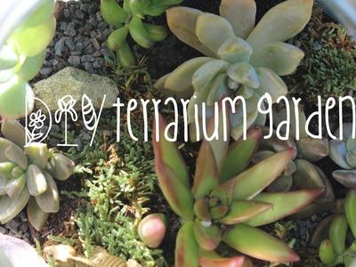 DIY Terrarium Garden✿