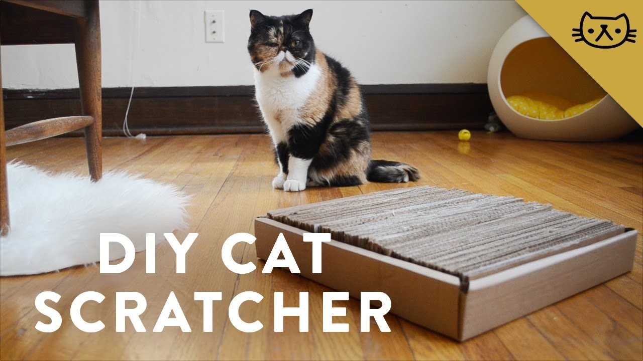 DIY Cardboard Cat Scratcher with Pudge