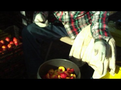 The process of crafting a nectarine wine