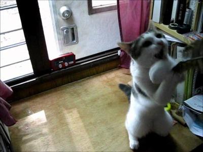 The Free DIY Cat Toy - A bit of fun.