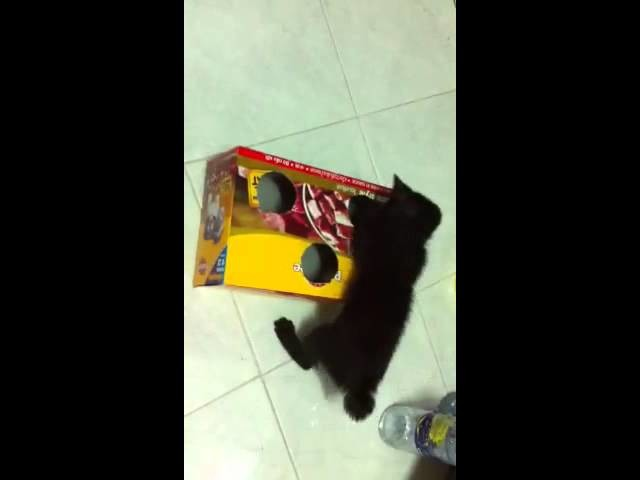 How to make a cat box toy
