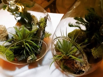 DIY Terrarium & Christmas Ornament - Great Pinterest Idea