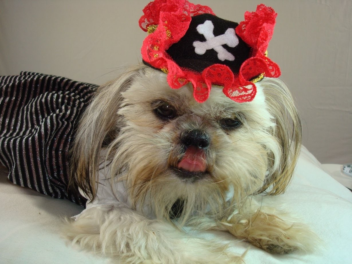 ✂  Pirate Costume Idea (Pt 1.3) : 15 Min DIY Tricorn Pirates Dog Hat for Halloween Party ♡