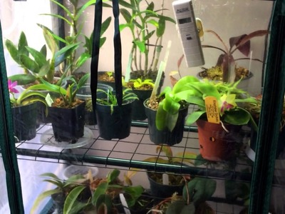 How to make a Cheap DIY Indoor Grow Chamber for Warm Growing Orchids and Lowland Carnivorous Plants