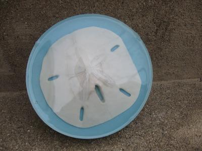 Sand Dollar Resin Coaster Craft Tutorial
