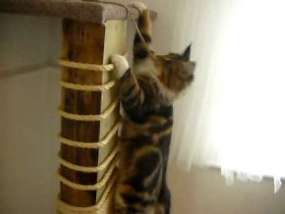 Climbing Cat, DIY Scratch Post, climbing frame