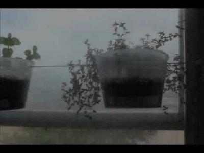 DIY - Window Garden