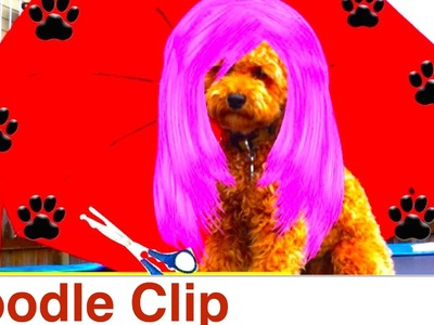 Poodle Clip & Groom at home- DIY Dog Grooming.Hygiene- a tutorial by Cooking For Dogs