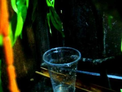 Homemade DIY water dripping system for reptiles (chameleons)