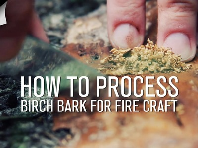 How To Process Birch Bark For Fire Craft