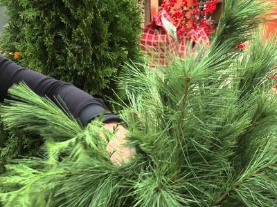 Christmas Arrangements for Your Planters