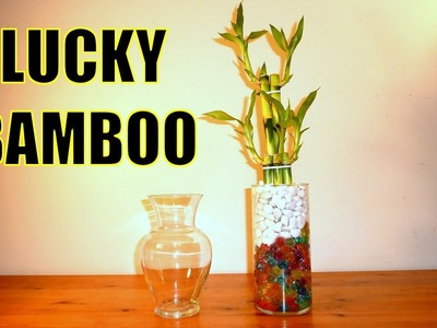 Lucky Bamboo Arrangements WIth Crystal Ball Beads | All you Need to Know About Lucky Bamboo
